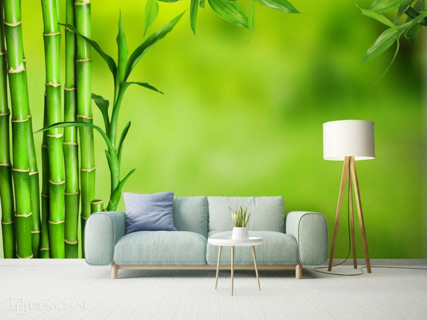 Fototapeta Bambus - Demural