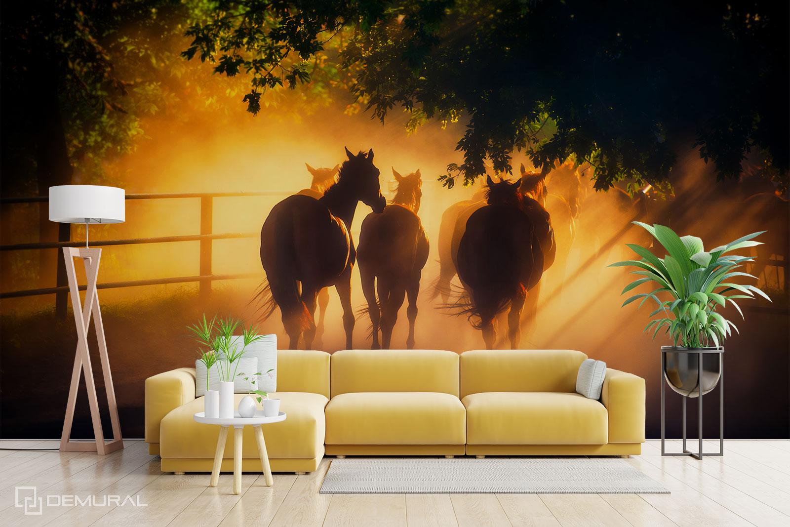 Fototapeta Galop o zachodzie słońca - Fototapety konie - Demural
