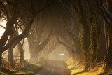 Dark Hedges III