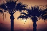 Two palm and sunset. Vintage photo