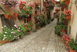 old paved street with incredible many flowers, village Spello