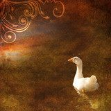 Vintage shabby chic background with goose