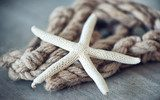 Dried Starfish Leaning Against Rope