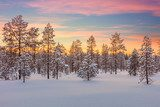Majestic winter landscape - sundown, forest, trees and snow