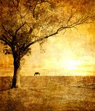 horse on sunset - toned picture in retro style