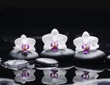 orchid flower and stones in water drops