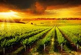 Stunning Vineyard Sunset
