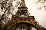 Eiffel tower with trees
