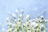 White wildflowers on color wooden background