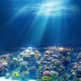 Sea or ocean underwater coral reef
