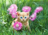 Cute little kitten sitting in rose flower meadow