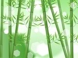 Abstract nature bamboo background