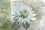 White summer flower on a vintage background