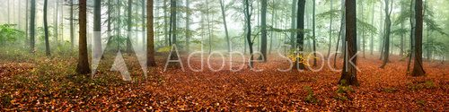 Wald Panorama im Herbst