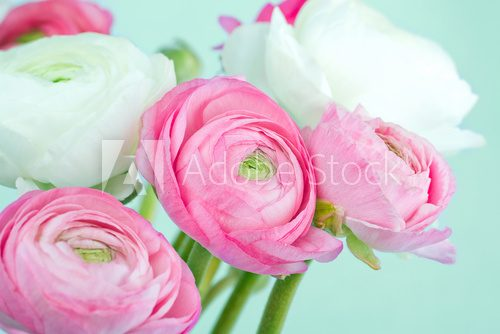 Bouquet of pink and white ranunculus