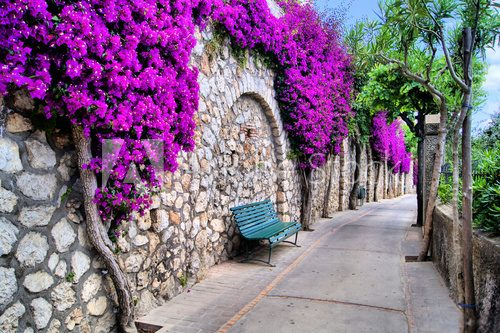 Vibrant flower draped pathway in Capri, Italy