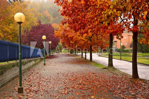 Autumnal trees along sidewalk in Alba, Italy.
