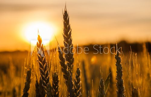 Wheat Stalk silhouette
