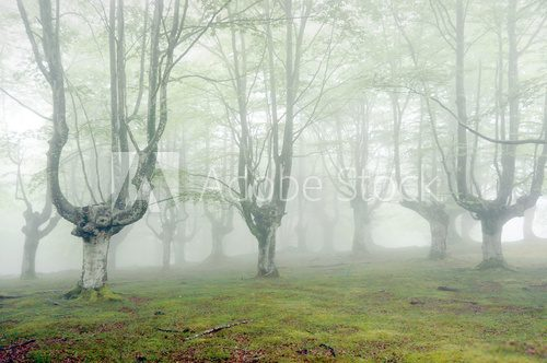 forest with fog and beautiful light