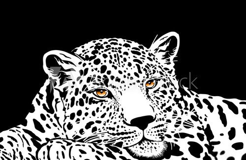 leopard with gold eyes
