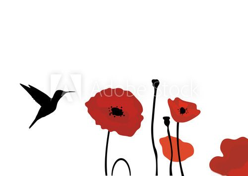 vector hummingbird and poppies