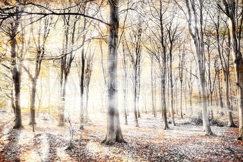 Whispering woodland in autumn fall